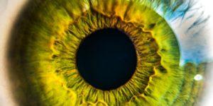 curiosidades sobre a pupila