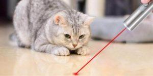 gato persegue luz vermelha de um ponteiro laser